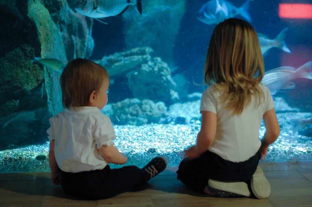 sorelle uguali acquario civico milano