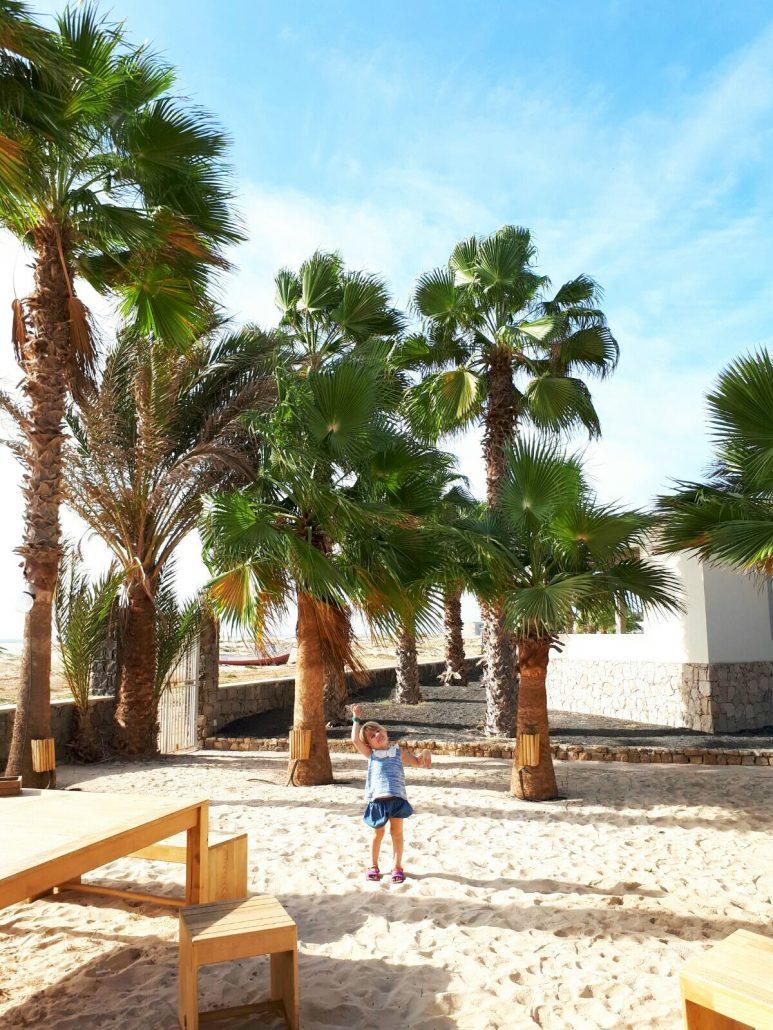 palme sulla spiaggia del resort crioula a capo verde